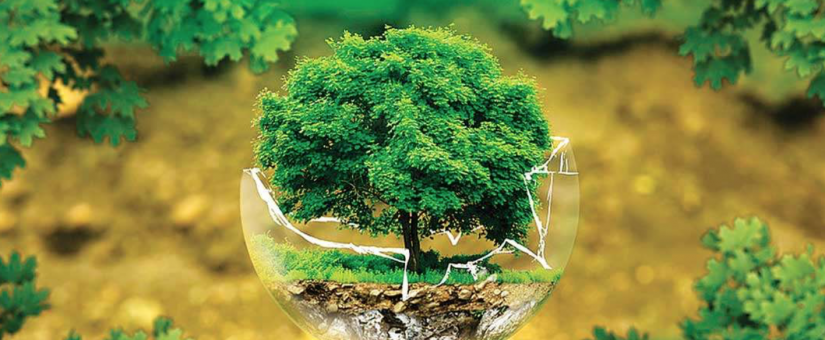 Sustainable Development: The Energy Efficiency Challange